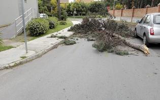 http://www.seguonews.it/gela-il-vento-sradica-alberi-e-cartelloni-paura-a-macchitella