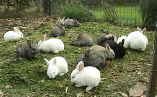 """M5S: """"Nella Finanziaria fondi per regate e conigli ma mancano quelli per il salvataggio nelle spiagge"""""""