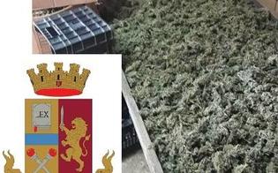 Operazione antidroga a Gela, sequestrati 16 chili di marijuana: 2 arresti