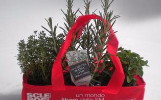 Le erbe aromatiche per aiutare la ricerca: volontari dell'Aism in piazza per raccogliere fondi a Caltanissetta, Gela e Niscemi