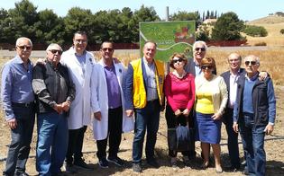 http://www.seguonews.it/gela-il-lions-club-semina-nuove-piantagioni-nellorto-di-borgo-manfria
