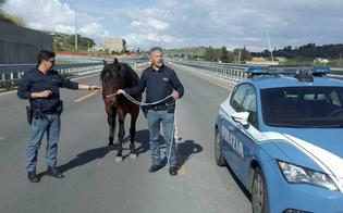 http://www.seguonews.it/caltanissetta-cavallo-al-galoppo-sulla-ss640-lintervento-dei-poliziotti-evita-il-peggio