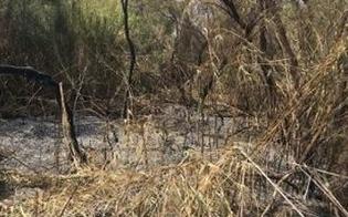 Incendi al Biviere di Gela, M5S: atti vergognosi e deprecabili