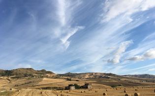 """I sindaci del centro Sicilia scrivono a Musumeci. """"Controlli sul grano importato. Marchio di qualità per quello siciliano"""""""