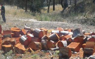 http://www.seguonews.it/sommatino-museo-delle-solfare-di-trabia-tallarita-tagliati-alberi-e-piante-ancora-sani-