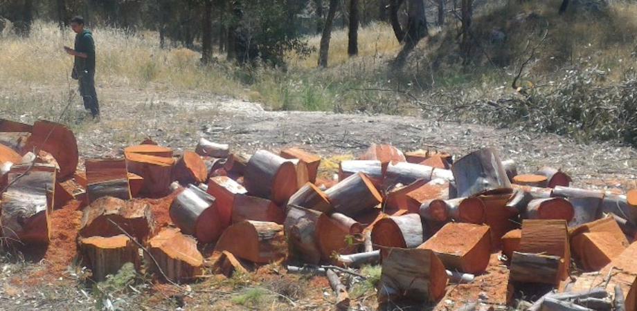 Sommatino, museo delle solfare di Trabia Tallarita: tagliati alberi e piante ancora sani