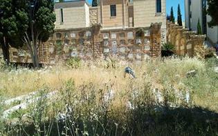 http://www.seguonews.it/erbacce-in-citta-nuova-segnalazione-al-cimitero-angeli-impossibile-mettere-un-fiore