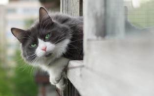 http://www.seguonews.it/uccide-un-gatto-per-mangiarlo-luomo-e-stato-bloccato-mentre-gettava-le-interiora-dellanimale