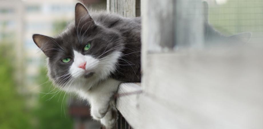 Uccide un gatto per mangiarlo, l'uomo è stato bloccato mentre gettava le interiora dell'animale
