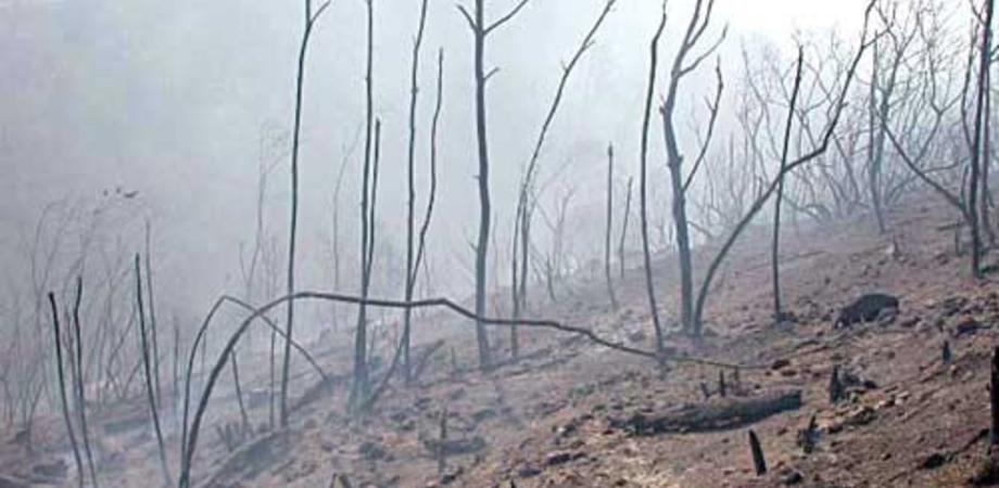 Rogo nel siracusano, cinque cani legati ad un albero morti carbonizzati