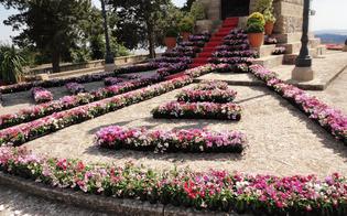 http://www.seguonews.it/caltanissetta-mille-piantine-per-la-tradizionale-infiorata-al-redentore