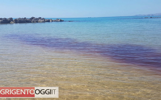 http://www.seguonews.it/agrigento-chiazze-rosse-in-mare-la-capitaneria-si-tratta-di-meduse-fare-attenzione