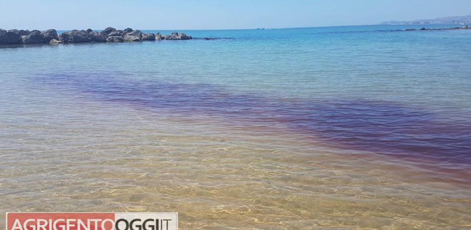 """Agrigento, chiazze rosse in mare. La Capitaneria: """"Si tratta di meduse, fare attenzione"""""""
