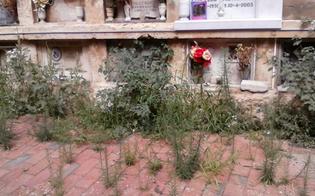 http://www.seguonews.it/cittadina-nissena-indignata-il-cimitero-angeli-nel-degrado-e-il-comune-che-fa