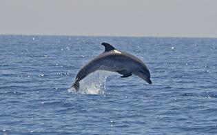 http://www.seguonews.it/delfini-inseguiti-e-maltrattati-diportisti-poco-rispettosi-del-mare