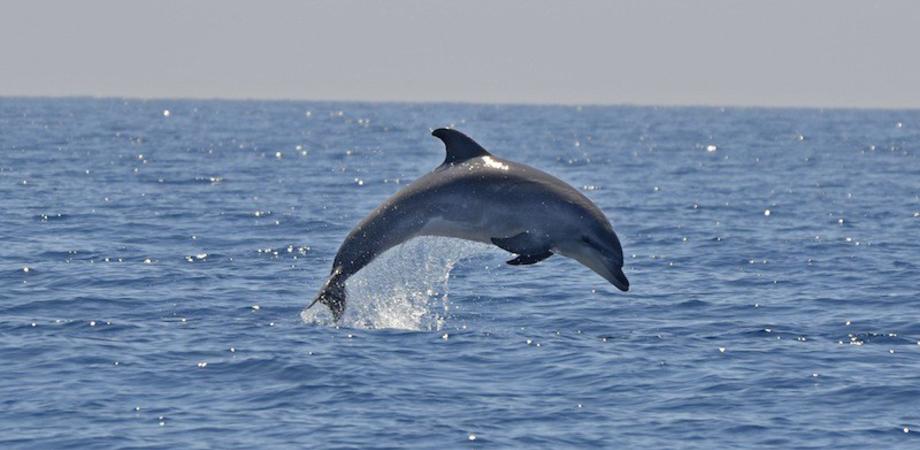 Delfini inseguiti e maltrattati, diportisti poco rispettosi del mare