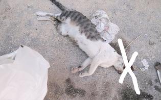 http://www.seguonews.it/gatta-massacrata-e-uccisa-colpi-di-pietre-da-un-gruppo-di-ragazzini