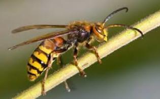 http://www.seguonews.it/assalito-da-vespe-agricoltore-muore-per-choc-anafilattico