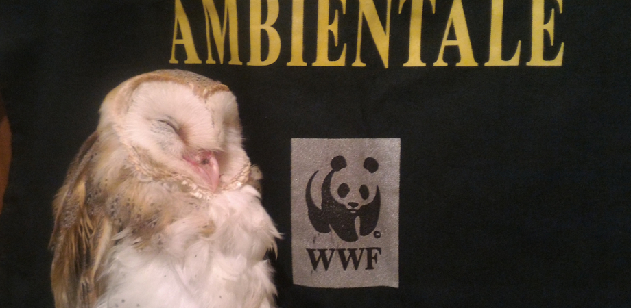Caltanissetta, le guardie del Wwf recuperano un barbagianni in difficoltà