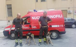 https://www.seguonews.it/anche-i-cani-dei-vigili-del-fuoco-aki-e-margot-impegnati-nelle-ricerche-della-donna-scomparsa-a-san-cataldo