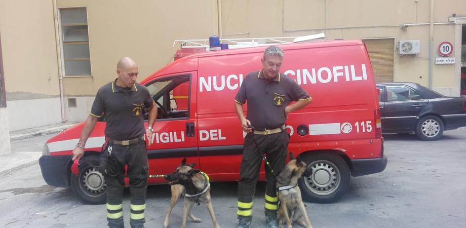 Anche i cani dei vigili del fuoco Aki e Margot impegnati nelle ricerche della donna scomparsa a San Cataldo