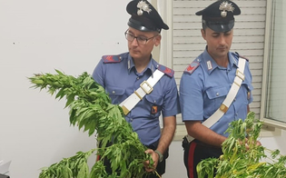http://www.seguonews.it/butera-scoperta-una-piantagione-di-marijuana-arrestati-due-fratelli