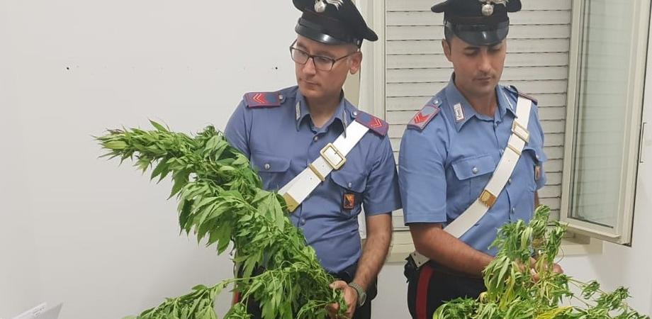 Butera, scoperta una piantagione di marijuana: arrestati due fratelli