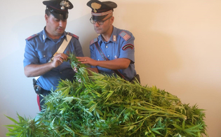 http://www.seguonews.it/mazzarino-era-ai-domiciliari-e-coltivava-marijuana-28enne-finisce-in-cella