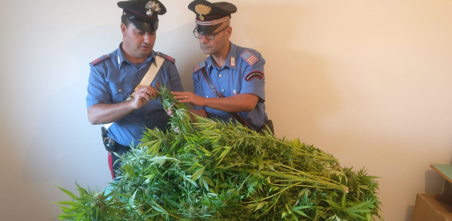 Mazzarino, era ai domiciliari e coltivava marijuana: 28enne finisce in cella