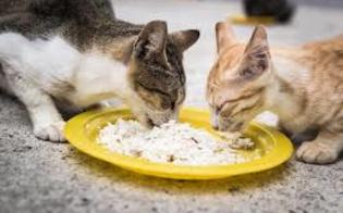 http://www.seguonews.it/minaccia-con-una-spranga-di-ferro-la-vicina-di-casa-perch-da-cibo-ai-gatti