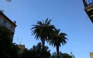 http://www.seguonews.it/caltanissetta-torna-a-colpire-il-punteruolo-rosso-lorina-nessun-trattamento-sulle-palme