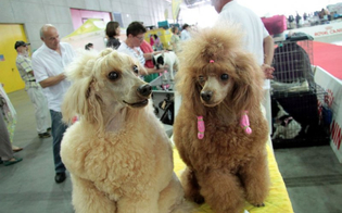 http://www.seguonews.it/delia-al-via-la-terza-edizione-dellexpo-cinofila-in-mostra-i-migliori-cani-di-razza