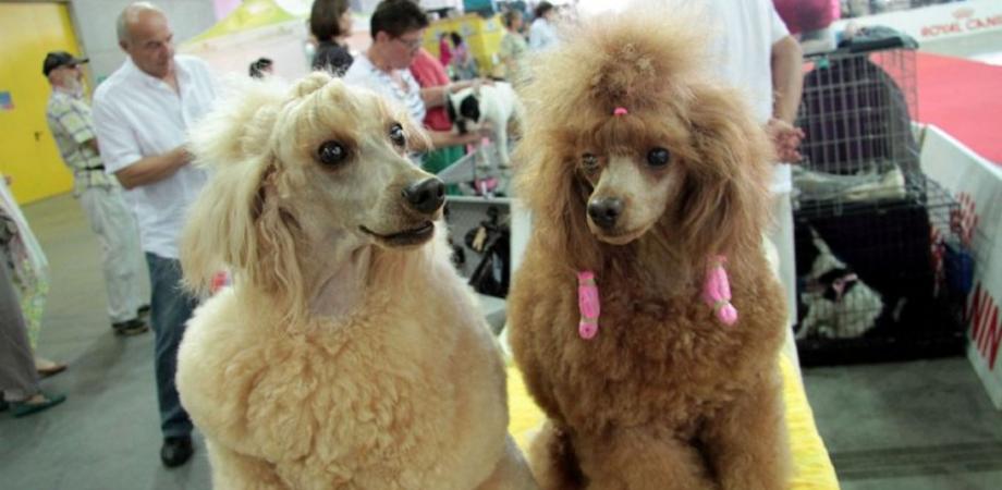 Delia, al via la terza edizione dell'Expo cinofila: in mostra i migliori cani di razza