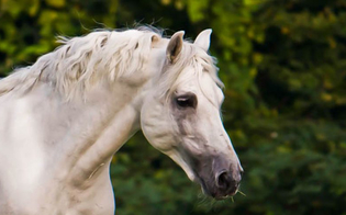 http://www.seguonews.it/cavallo-al-funerale-segue-feretro-del-padrone-commozione-a-gela