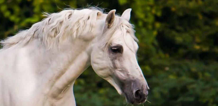 Cavallo al funerale segue feretro del padrone: commozione a Gela