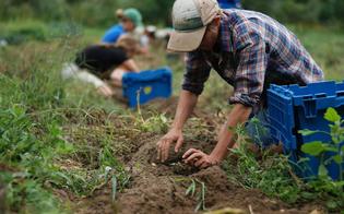 http://www.seguonews.it/manca-lacqua-per-irrigare-gli-agricoltori-di-gela-e-niscemi-denunciano-lassessorato