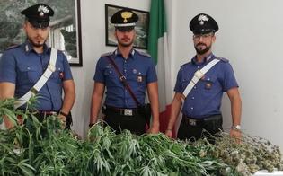 https://www.seguonews.it/sommatino-rinvenuta-in-un-appartamento-una-serra-per-la-coltivazione-di-marijuana-arrestati-due-giovani