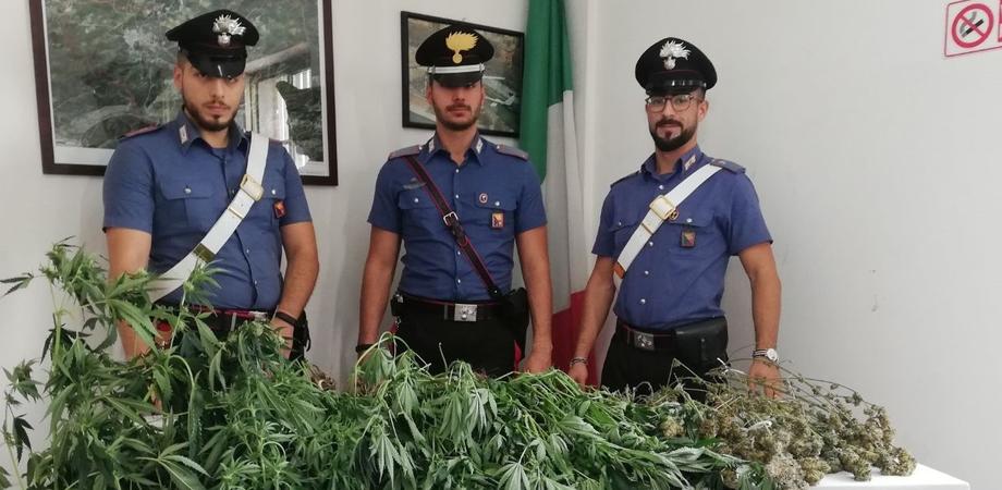 Sommatino, rinvenuta in un appartamento una serra per la coltivazione di marijuana: arrestati due giovani