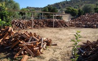 http://www.seguonews.it/gela-sorpresi-a-tagliare-alberi-in-un-bosco-demaniale-tre-arrestati-dai-finanzieri