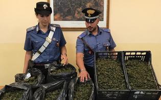 http://www.seguonews.it/gela-trovati-con-sette-chili-di-marijuana-arrestati-padre-e-figlio