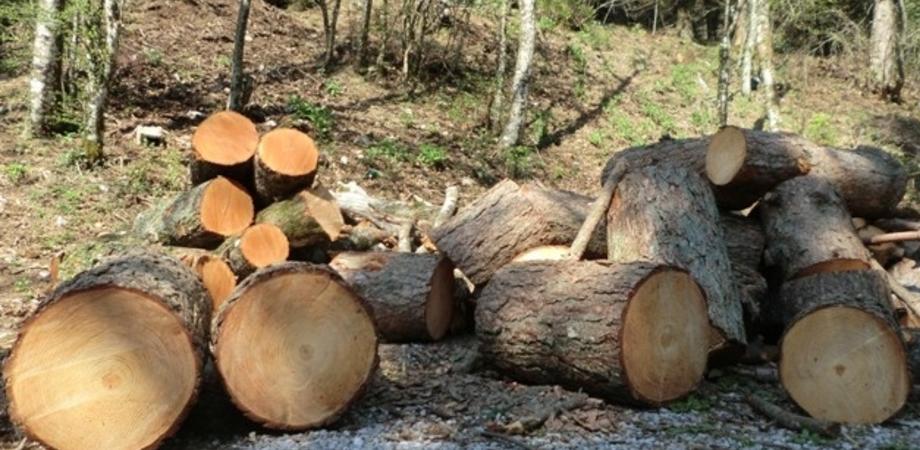 Caltanissetta, abbattuti 15 pini a Pian del Lago. Esposto del Wwf: tagli illegali