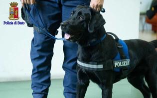 http://www.seguonews.it/caltanissetta-cani-antidroga-della-polizia-in-una-scuola-superiore-trovata-hashish-