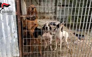 http://www.seguonews.it/rubavano-cani-di-razza-per-rivenderli-animali-torturati-per-togliere-il-microchip-banda-sgominata-dai-carabinieri