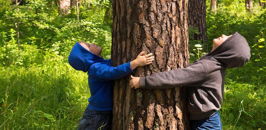 Caltanissetta, festa dell'albero al parco Dubini tra giochi, eco - traking, cuccia e pane cunzato