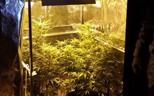 http://www.seguonews.it/san-cataldo-a-casa-coltivava-una-serra-di-marijuana-arrestato-un-29enne
