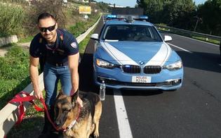 http://www.seguonews.it/caltanissetta-pastore-tedesco-vagava-impaurito-sulla-ss640-salvato-dalla-polizia-stradale