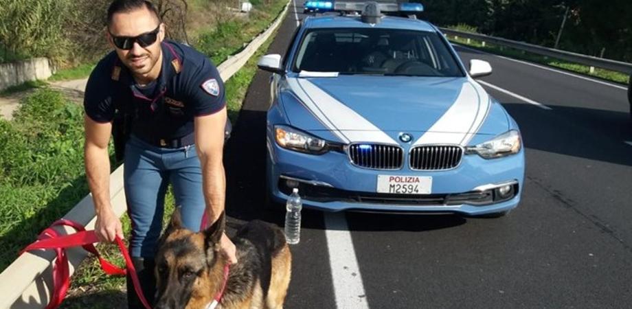 Caltanissetta, pastore tedesco vagava impaurito sulla Ss640: salvato dalla Polizia Stradale