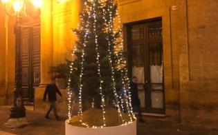 http://www.seguonews.it/lalbero-di-natale-del-comune-di-caltanissetta-scatena-lironia-dei-social-e-viene-ribattezzato-pucciolo-