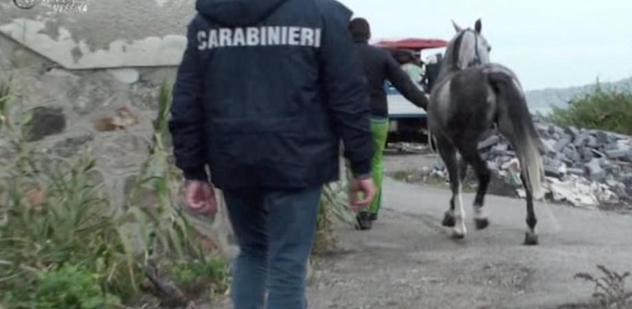 Corsa clandestina di cavalli a Caltanissetta, blitz alle prime luci dell'alba: sette persone arrestate