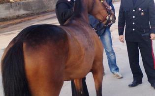 http://www.seguonews.it/corsa-clandestina-di-cavalli-a-caltanissetta-i-nomi-degli-arrestati